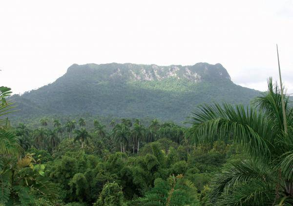 Excursión El Yunque