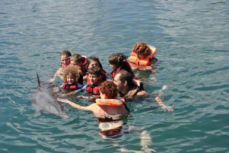 Baño con los Delfines