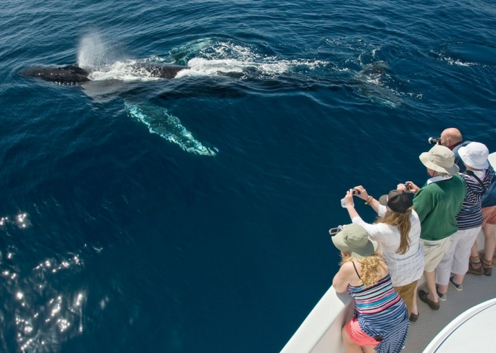 Main image of excursion Whale Watching