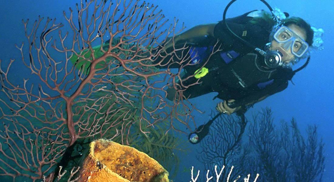 Sol Sirenas Coral
